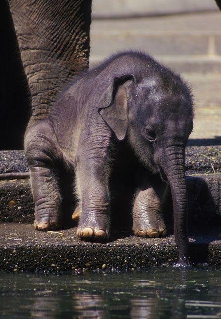 teeny baby elephant.