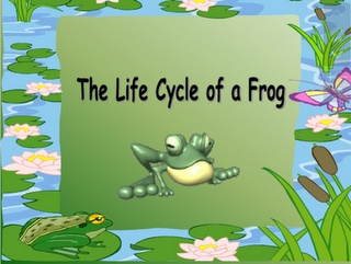 Frog Life Cycles Powerpoint