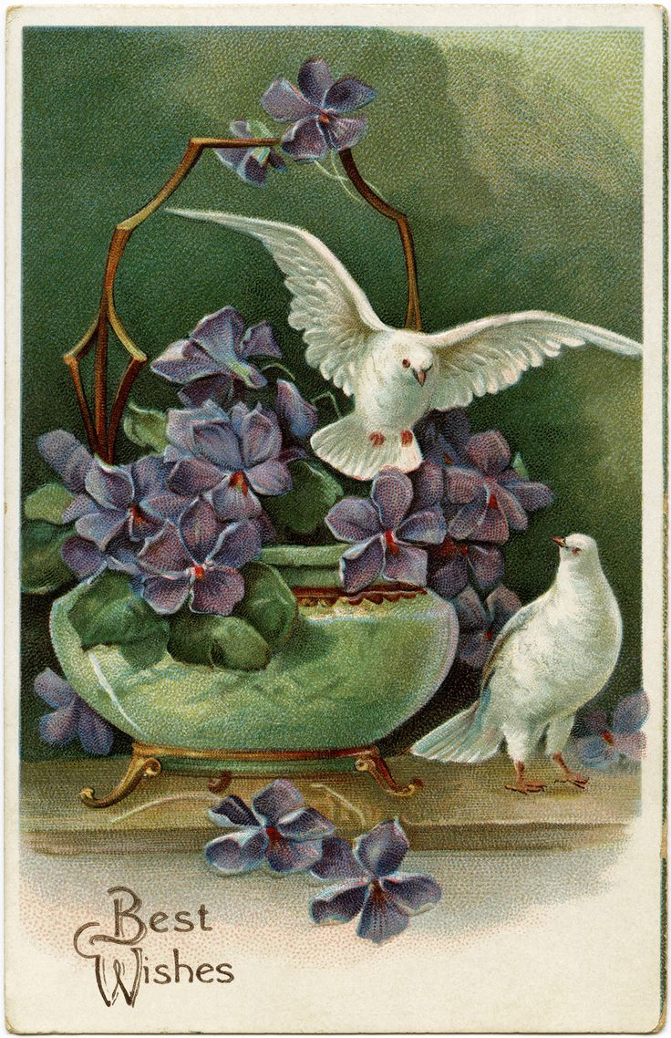 Purple Flowers and Doves ~ Free Vintage Postcard Image | Old ...