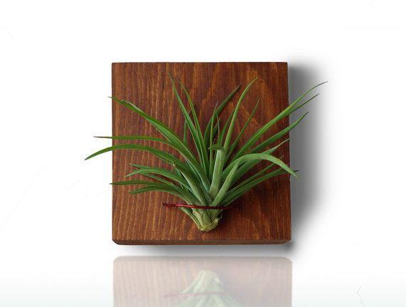 Holz Wand Pflanzer vertikale Pflanzer kleine indoor Pflanzer