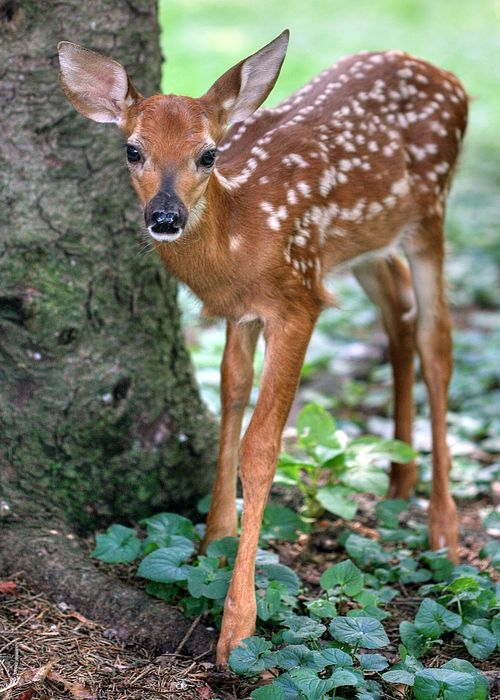 I believe this cute little fawn was in my backyard!