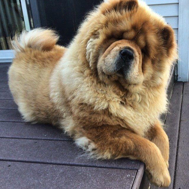 I NEED THIS FURY DOG