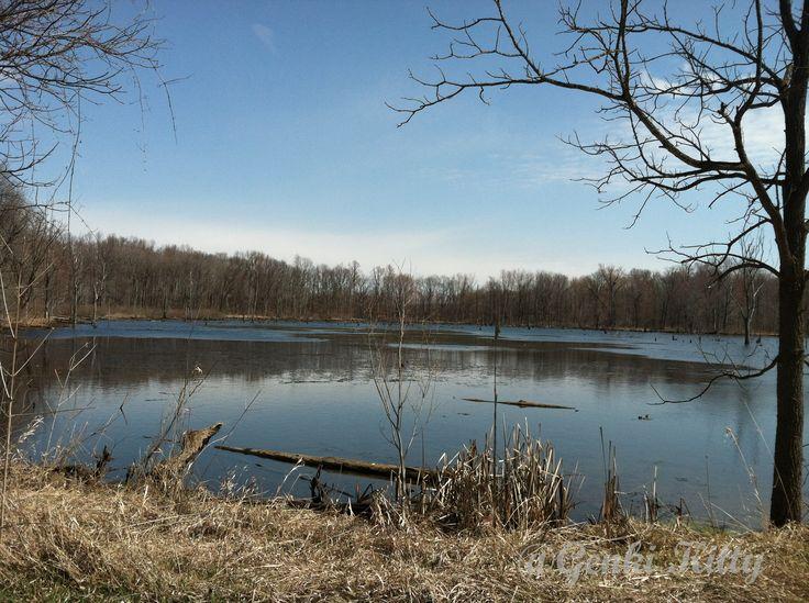 Wetlands at Potato Creek State Park Indiana