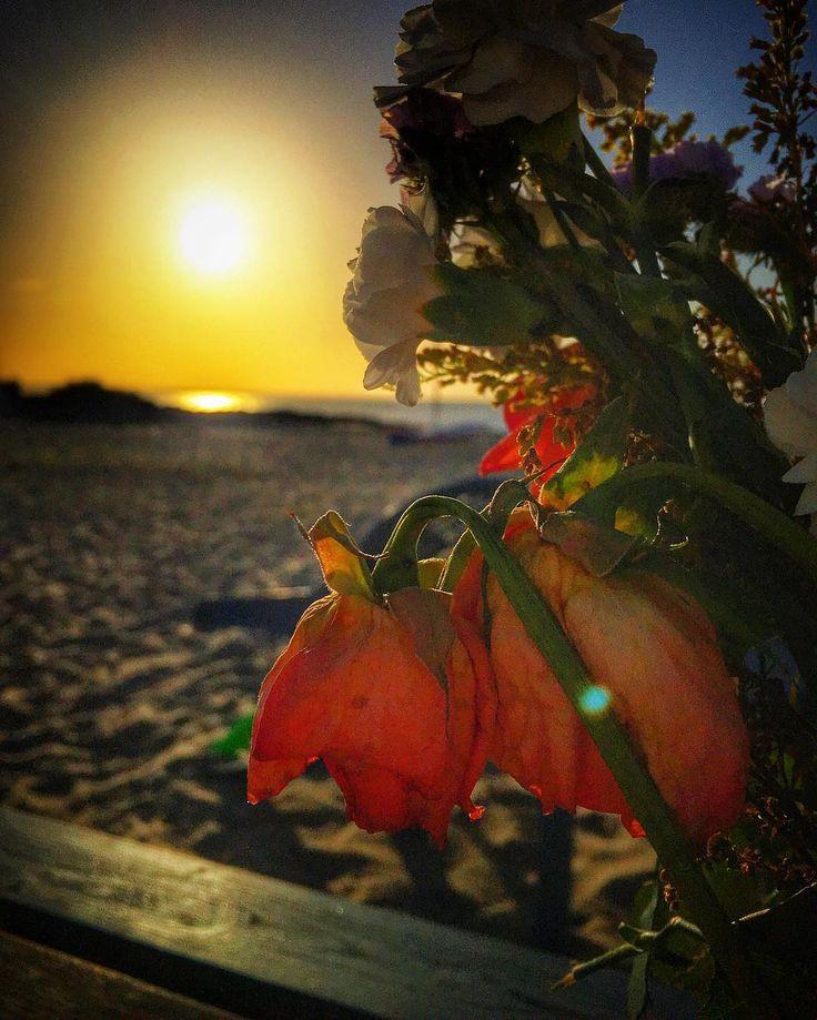 Sunrise on the beach. #sunrise #bokeh #flowers #beach #ocean #sunshine #goodmorning #summer #holiday #vacation #light #idyllic #iphone6s #beaniedee