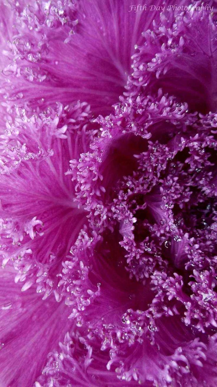 131 best images about Color: Orchid on Pinterest