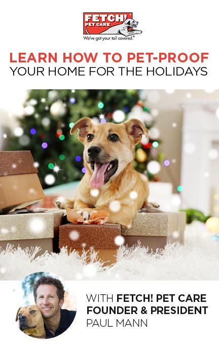 Join us for this FREE class hosted by Fetch! Pet Care President & CEO, Paul Mann, today at 4:30pm Pacific! Click to join the event. #woof #meow #DIY #pets #FetchPetCare #FacebookLive #holidays #petsafety