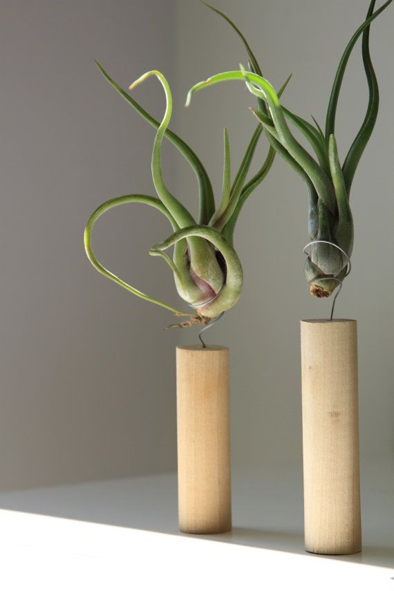 20 best images about vertical gardening and air plants on for Air plant holder ideas