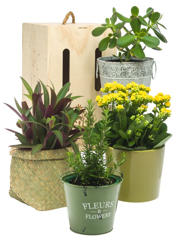 Beautiful potted plants in decorative pots by Plants Please! a division of Trees Please!