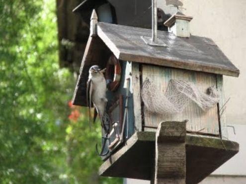 Casas cosas tandil para la casa jard n casitas para - Casitas para el jardin ...