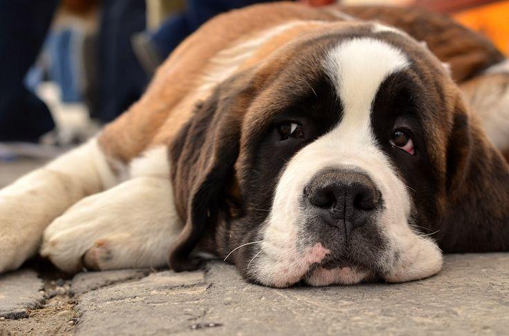 Jakie macie pomysły na spędzenie rozpoczynającego się tygodnia? http://www.fototapeta24.pl/ #fototapeta #fototapeta24pl #week #monday #mondaymotivation #mondayblues #pies #dog