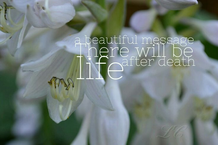 A beautiful message:there will be life after death.