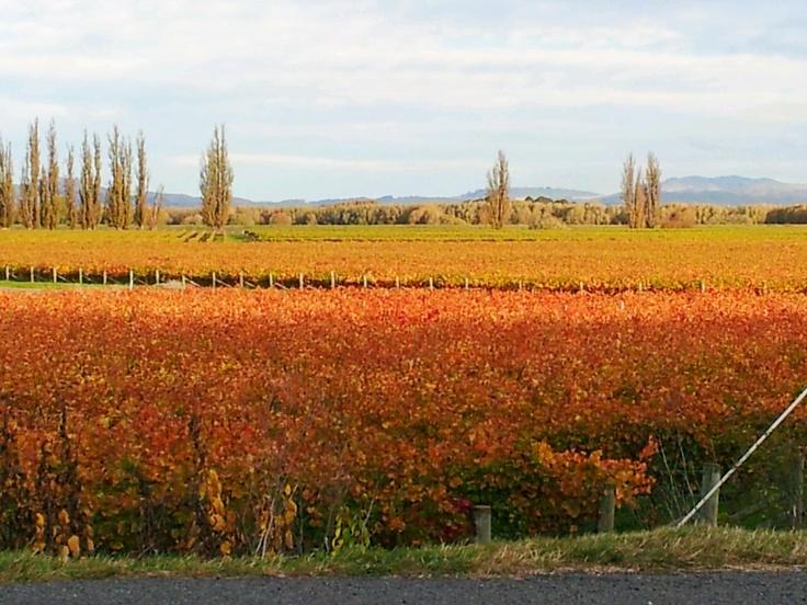 Autumn colours across the vineyards