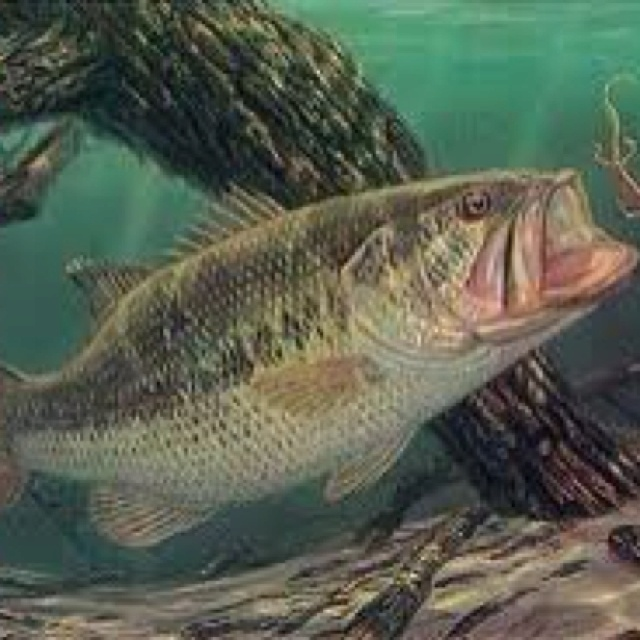85 best images about bass pictures on pinterest for Bass fishing tips