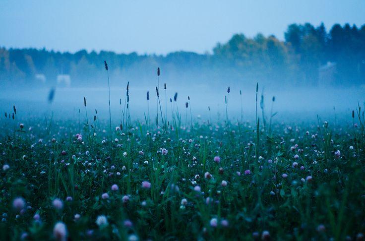 Foggy field / Suomi, Finland