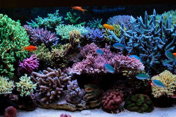 Saltwater Aquarium Reef Aquarium Pinterest
