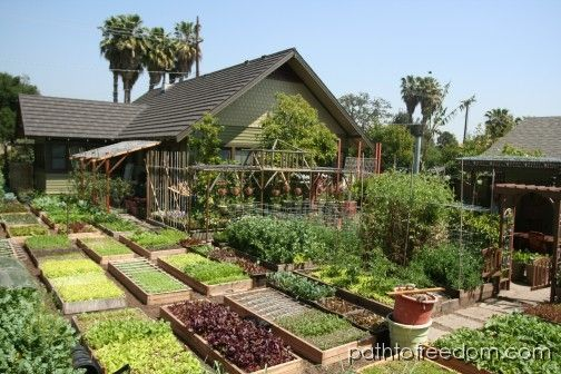 The Dervaes have shown that you can grow literally tons of food on very little land space. Path to Freedom