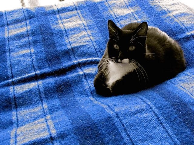 "Boofas the #cat loves ""JennifersHamam 's limited edition #wool & #organic #cotton #blanket"
