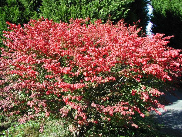6 New Landscaping Shrub Ideas