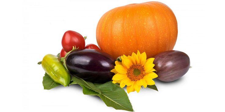 Alimentele proaspete, de sezon, conțin mai multe substanțe active decât cele conservate sau crescute artificial. Iată 10 alimente sănătoase pe care ar trebui să le consumăm toamna...