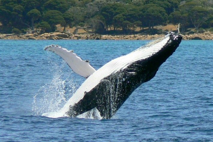 Go whale watching in Margaret River, Western Australia