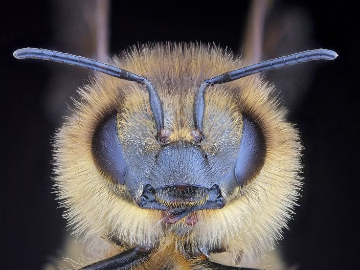 devastating truth about the decreasing number of bees.