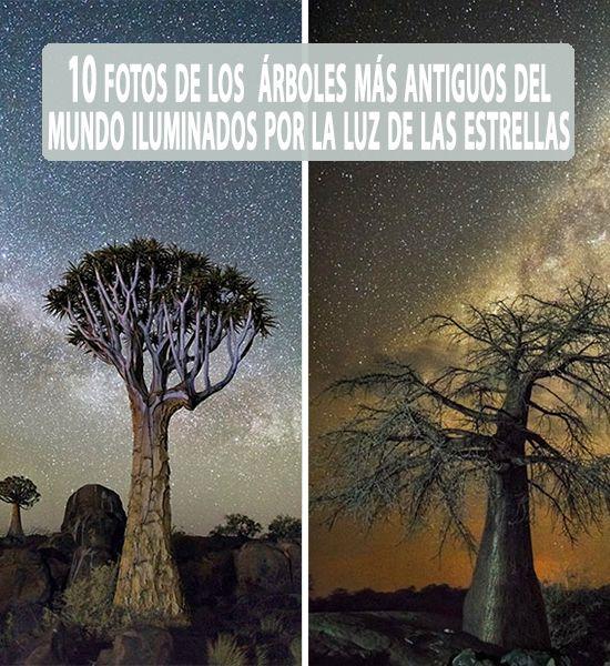 Estaserie de imágenes impactantes captura algunos de los árboles vivos más antiguos del mundo con el fondo decielos nocturnos brillantes en