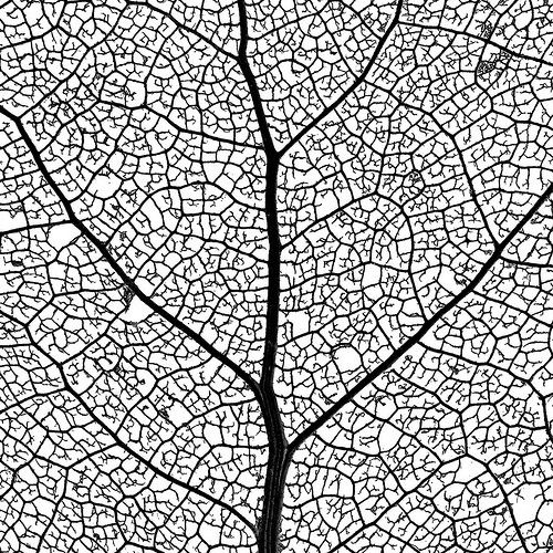 leaf skeleton network - macro photo - 4 of 4 (by ironrodart - royce bair)
