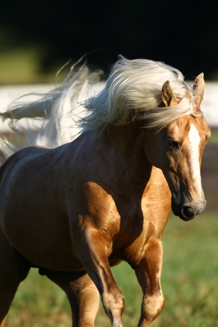 Most Inspiring Wallpaper Horse Chromebook - b5176c704b1039333fe15d40a92cd699--ivory-pretty-pictures  2018_92773.jpg
