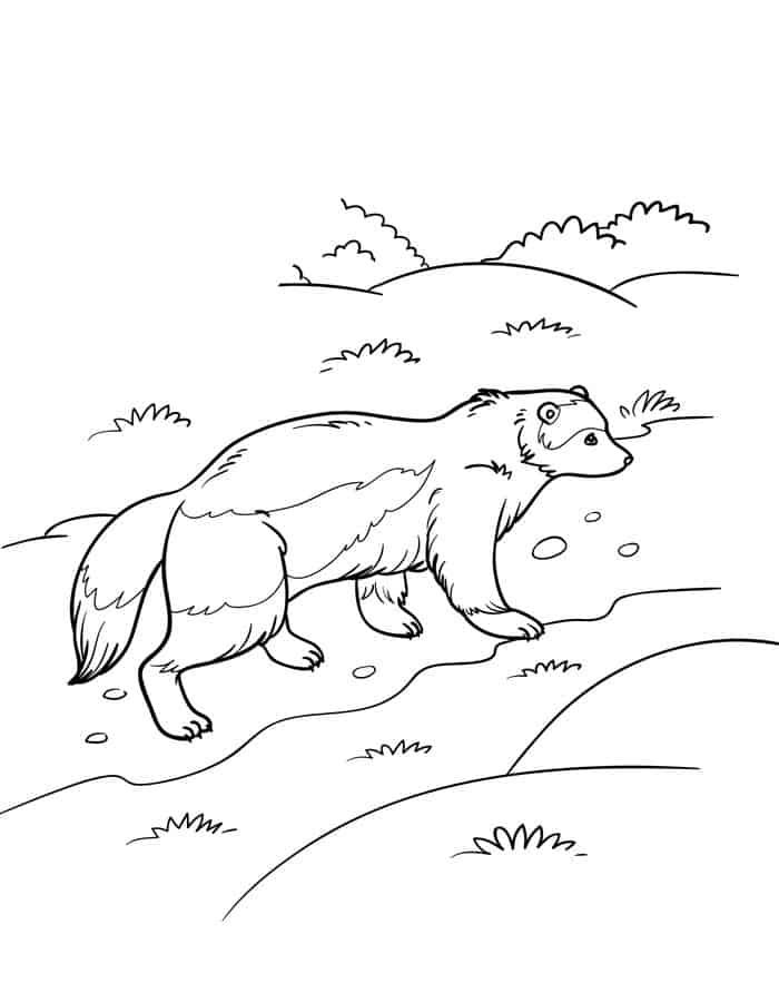 Wolverine Animal Coloring Pages For Adults Wolverine Animal Superhero Coloring Pages Superman Coloring Pages