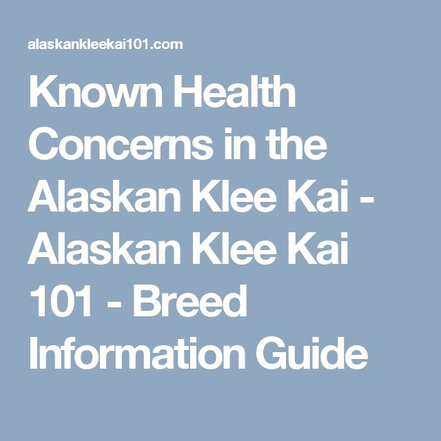 Known Health Concerns in the Alaskan Klee Kai - Alaskan Klee Kai 101 - Breed Information Guide