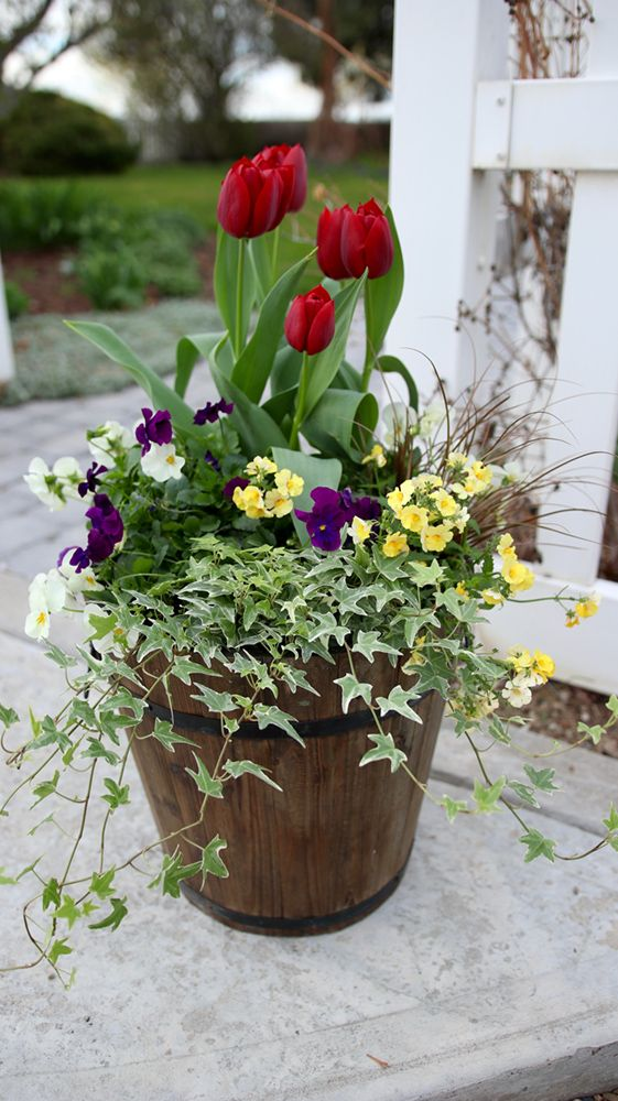 97 best container garden recipes images on pinterest container pot up a bit of spring color complete with gorgeous tulips as the focal point container flowersflower planterscontainer plantsgarden workwithnaturefo