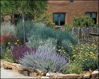 Backyard Ideas Texas texas xeriscape ideas front yard xeriscaping Moving Away From The Big Green Lawn School Of Landscaping Its Insupportable Here Xeriscapingxeriscape Plantslandscaping Ideasbackyard
