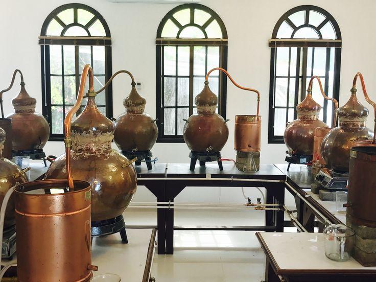 Our Omani Frankincense Distillery