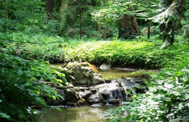 Magyarország tele van szebbnél szebb erdőkkel, tájakkal és többek között gyönyörű botanikus kertekkel is.