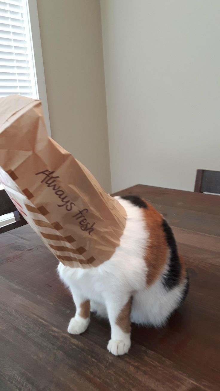 My cat was looking for food and got her head stuck in a Tim Horton's bag... my first instinct was to take a picture before helping her http://ift.tt/2kyo5gg
