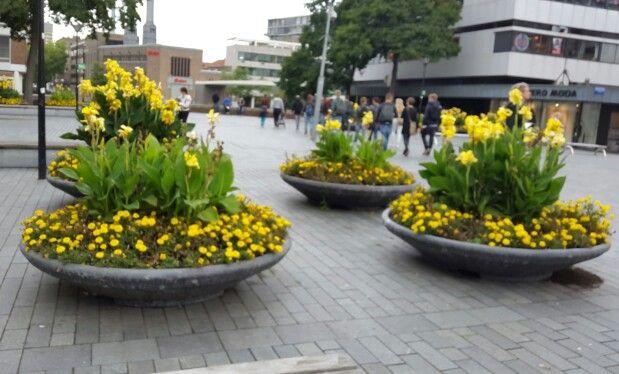 Bloembakken met gele bloemen, Rotterdam