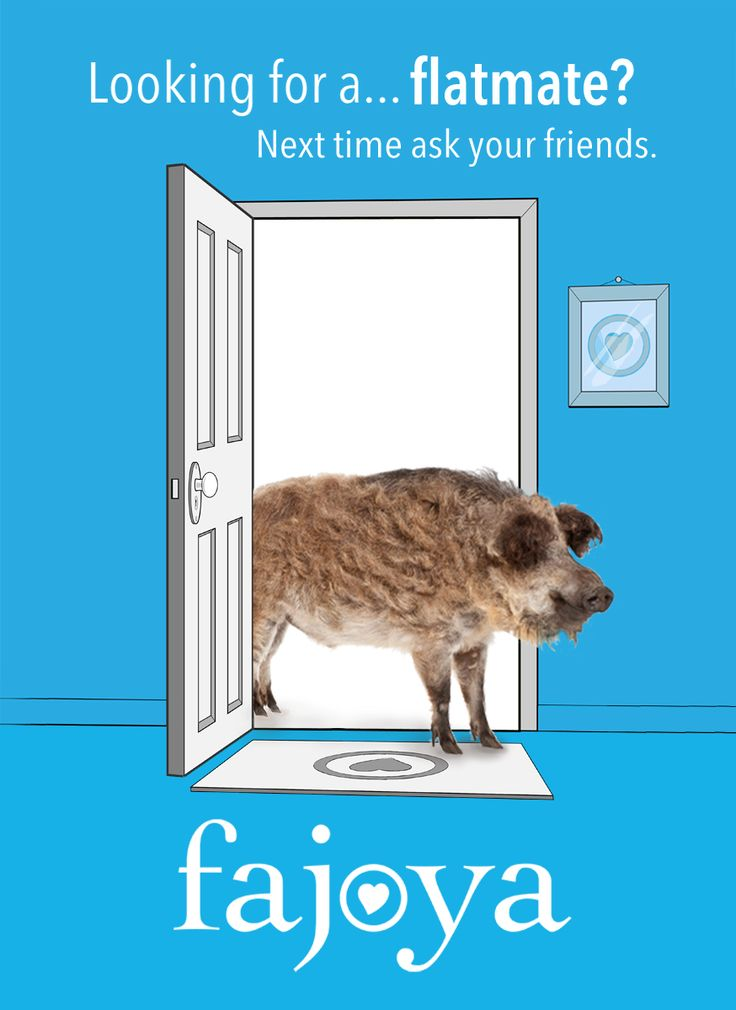 Looking for a... flatmate? Next time, ask your friends first!