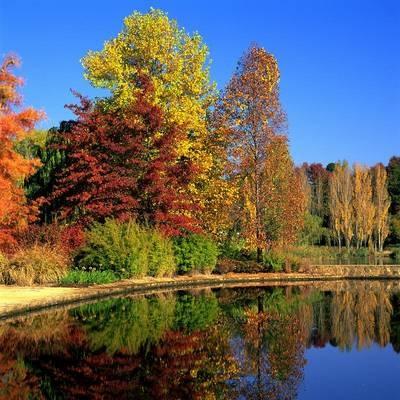 Autumn in Australia - who can tell us where this photo was taken?