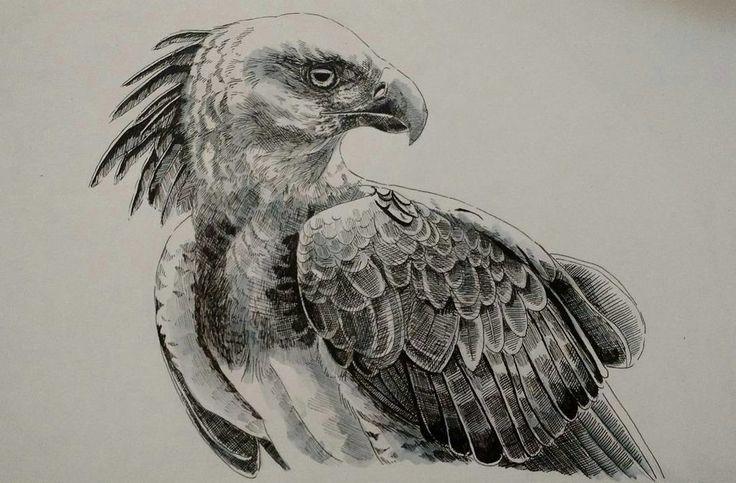 Harpy eagle hunting monkey - photo#45