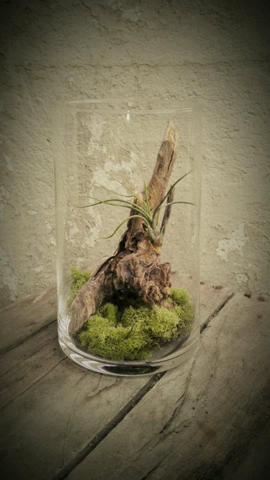 knotted driftwood + air plant terrarium as small favor and larger version as centerpiece