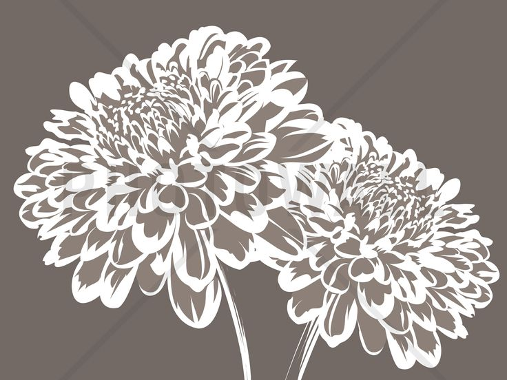 Blossom my Heart - Mullvad - Tapetit / tapetti - Photowall