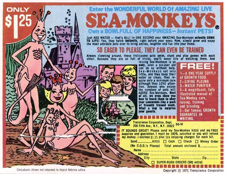 The entire family staring wide-eyed into a bowl of brine shrimp.  The bottom feeders of the aquatic food chain elevated to the height of fascinating household science experiment.  Who are the advertising geniuses that created Sea Monkeys.  Right up there with the Venus Fly Trap people, Chia pets, Pet Rocks and X-Ray Specs.  Genius!