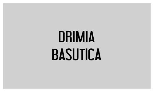 Drimia basutica