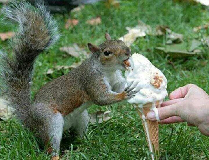 Ice cream anyone??