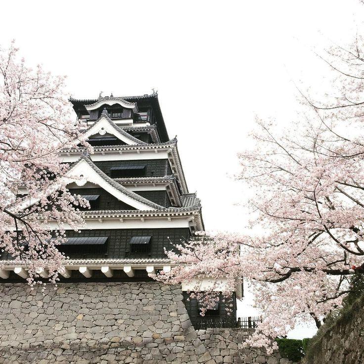 朝から熊本行って太平燕食べてお花見して満喫な日曜 #紅蘭亭 #職場の方ばったり  #熊本城 #散策 #ダイエット #雨降る前満喫できてよかった by kayoko9985