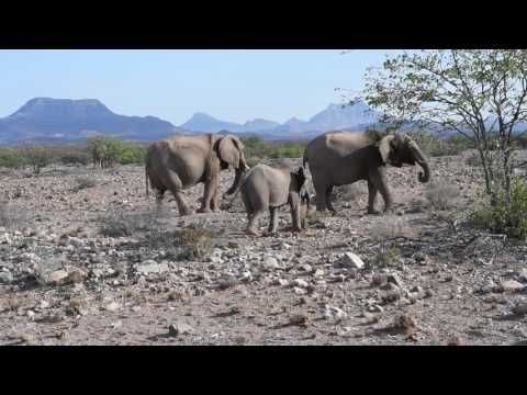 African safari destination Namibia