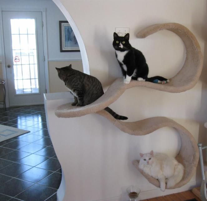 The Double Wave by Cloud Nine Cat Trees. Easily mounted on the side of a window to flow out in front of the glass and allow cats view of the outside, or along a wall. Can be mounted to the left or right, in either carpeted or finished wood. Smaller configurations available.