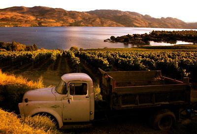 quailsgate winery, kelowna bc -- Curated by: Neufeld Jones | 103-1553 Harvey Ave, Kelowna, BC V1Y 6G1 | 250-717-5027