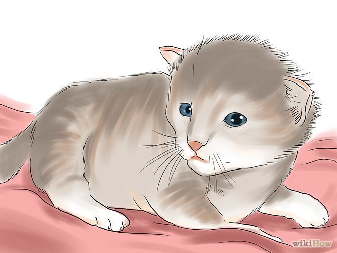 how to tell if kitten is overweight