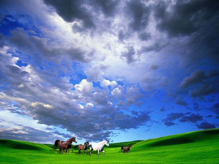 HorsesEssential Oil, Blue Sky, Nature Pictures, Desktop Wallpapers, Emotional Healing, Melissa Carter, Clear Sky, Blue Clear, Feelings Blue